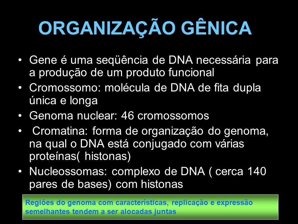 ORGANIZAÇÃO GÊNICA Gene é uma seqüência de DNA necessária para a produção de um produto funcional.
