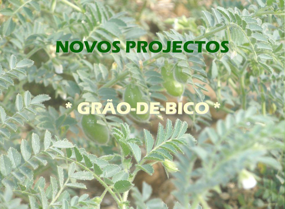 NOVOS PROJECTOS * GRÃO-DE-BICO *