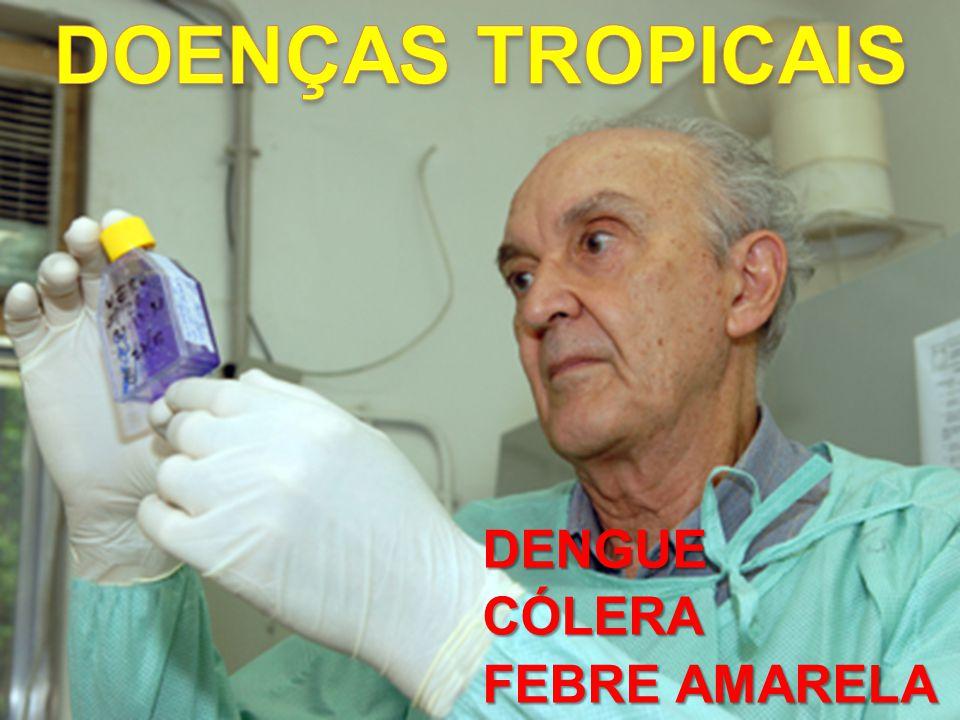 DOENÇAS TROPICAIS DENGUE CÓLERA FEBRE AMARELA