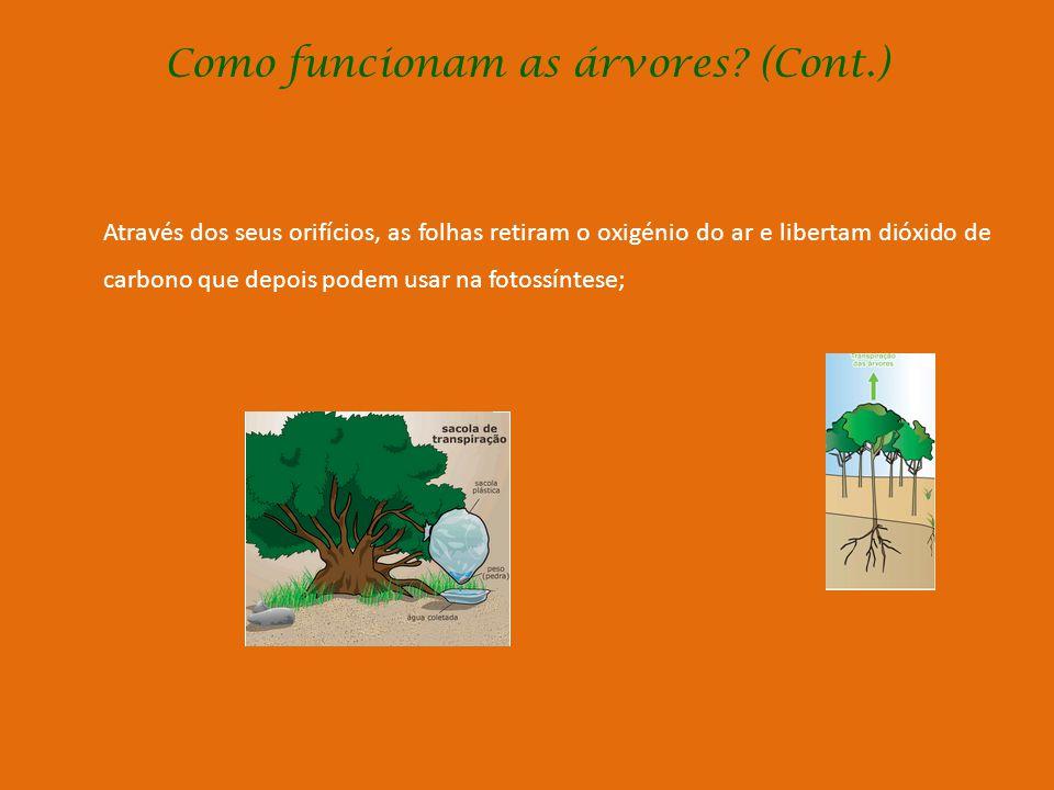Como funcionam as árvores (Cont.)