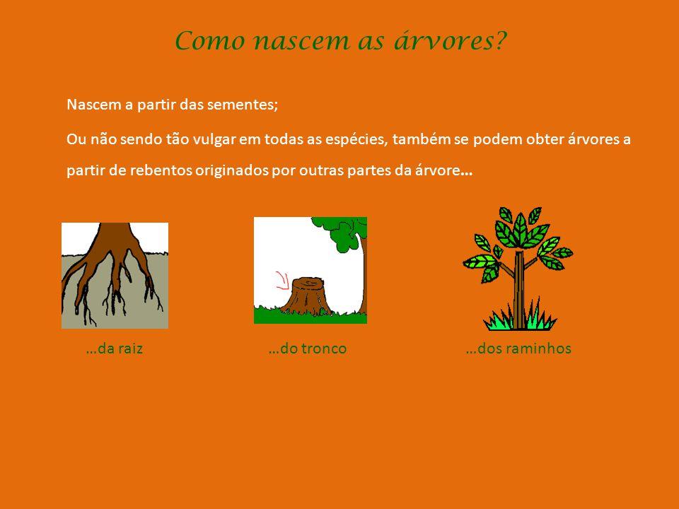 Como nascem as árvores