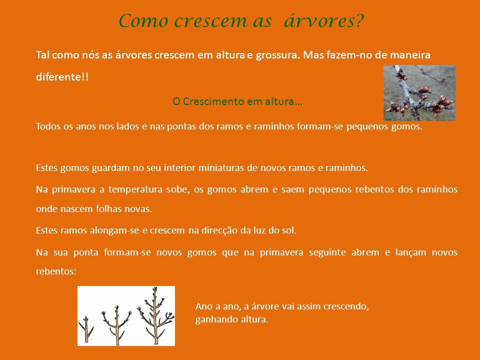 Como crescem as árvores