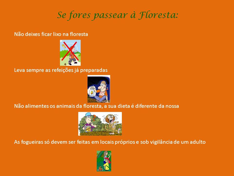 Se fores passear à Floresta:
