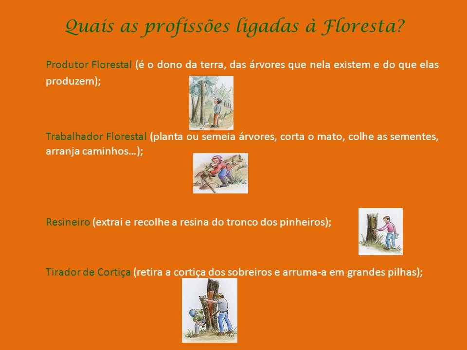 Quais as profissões ligadas à Floresta