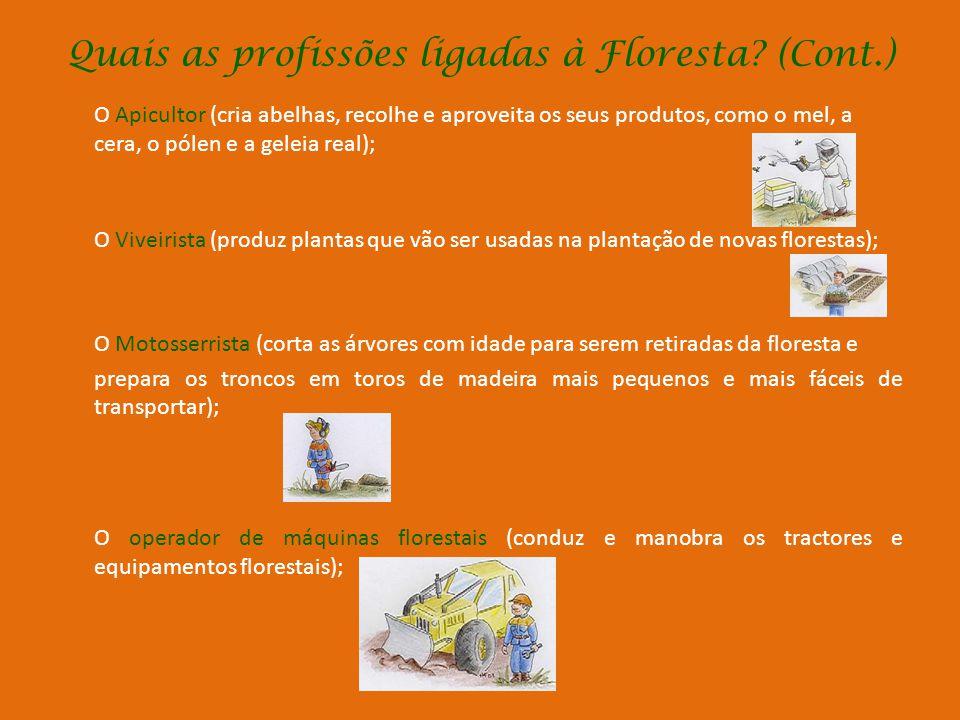 Quais as profissões ligadas à Floresta (Cont.)
