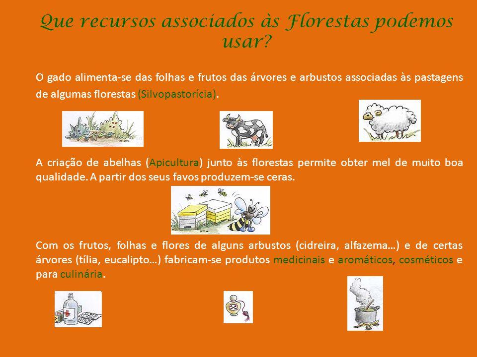 Que recursos associados às Florestas p0demos usar
