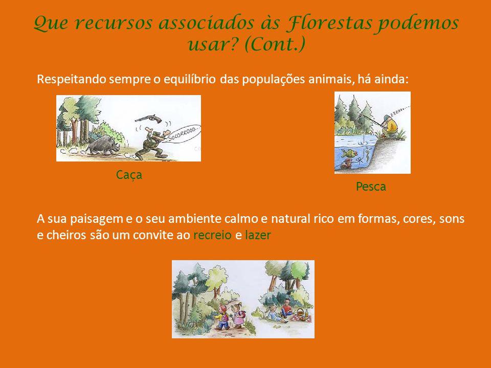 Que recursos associados às Florestas p0demos usar (Cont.)