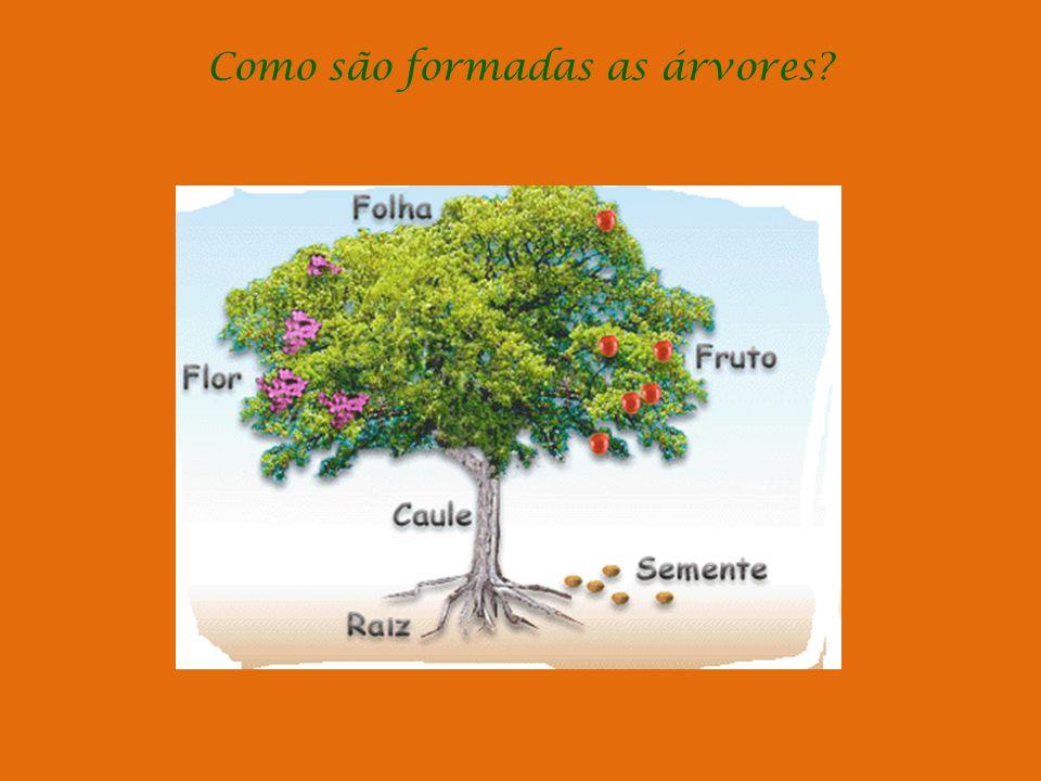 Como são formadas as árvores