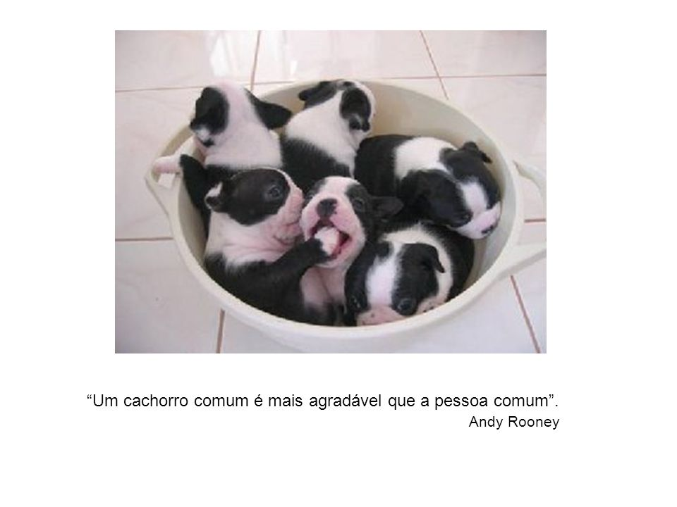 Um cachorro comum é mais agradável que a pessoa comum .