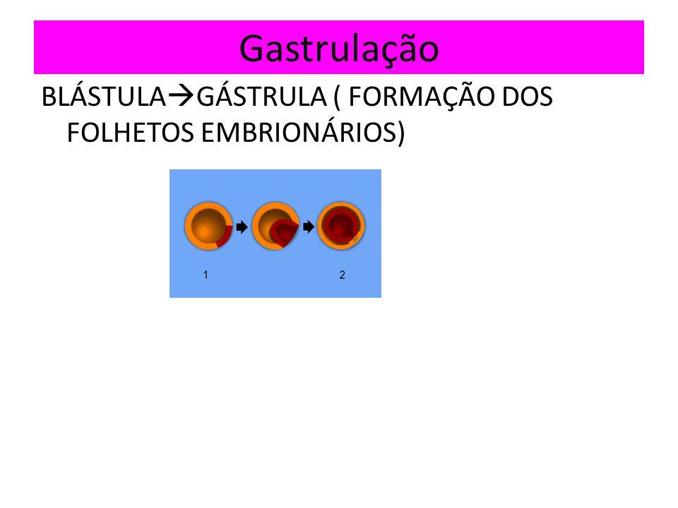 Gastrulação BLÁSTULAGÁSTRULA ( FORMAÇÃO DOS FOLHETOS EMBRIONÁRIOS)