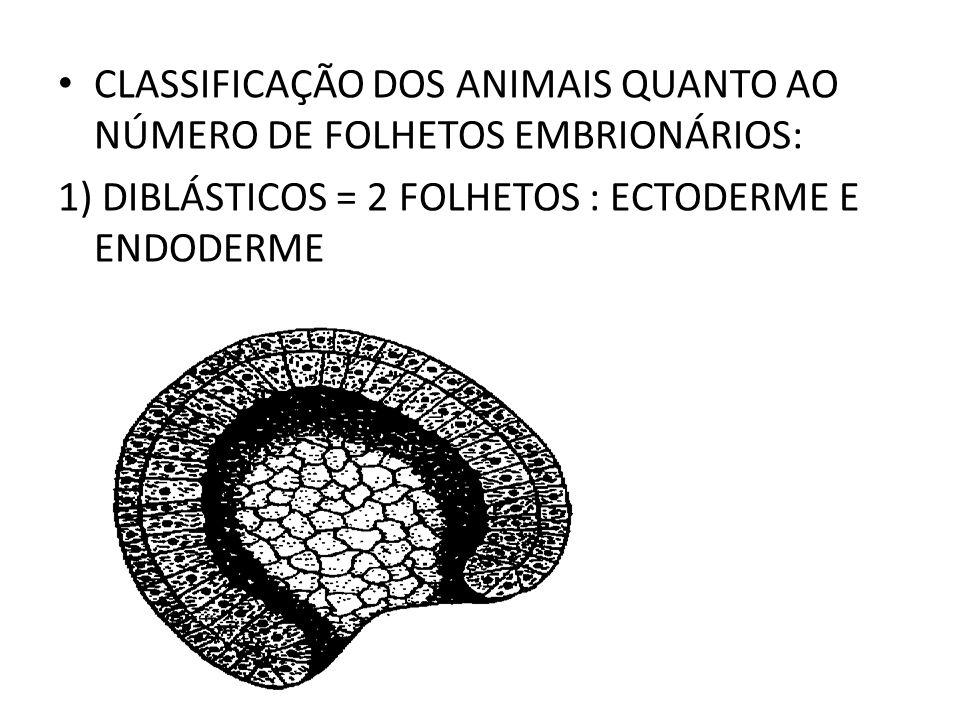 CLASSIFICAÇÃO DOS ANIMAIS QUANTO AO NÚMERO DE FOLHETOS EMBRIONÁRIOS: