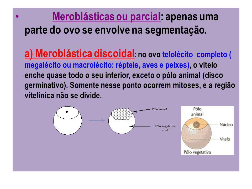 Meroblásticas ou parcial: apenas uma parte do ovo se envolve na segmentação.