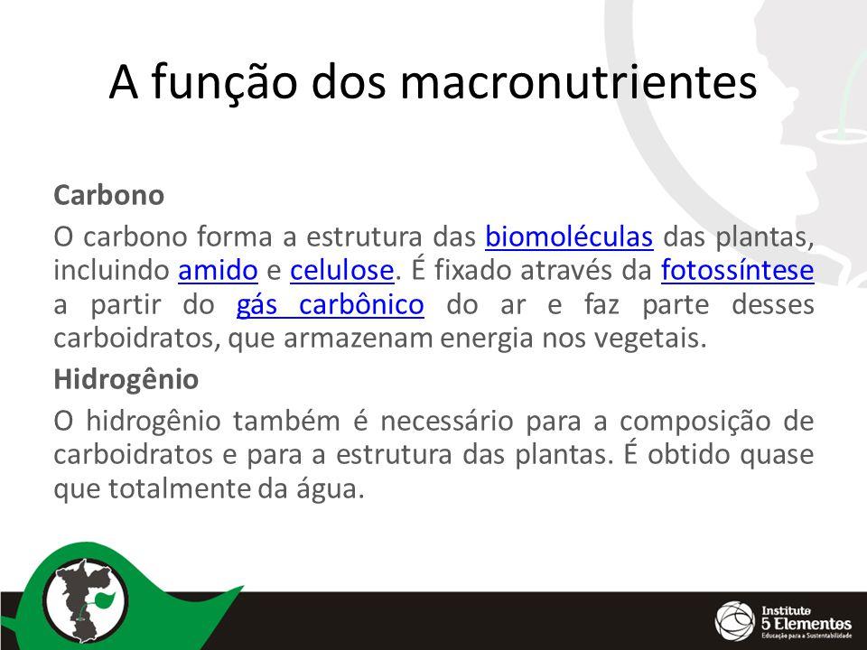 A função dos macronutrientes