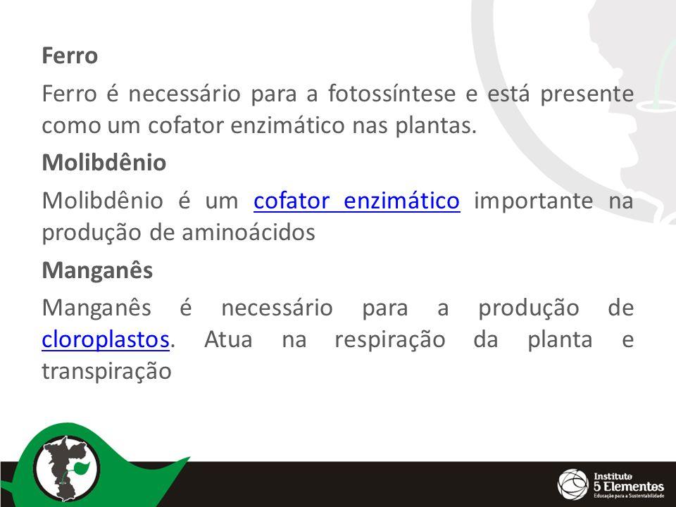 Ferro Ferro é necessário para a fotossíntese e está presente como um cofator enzimático nas plantas.