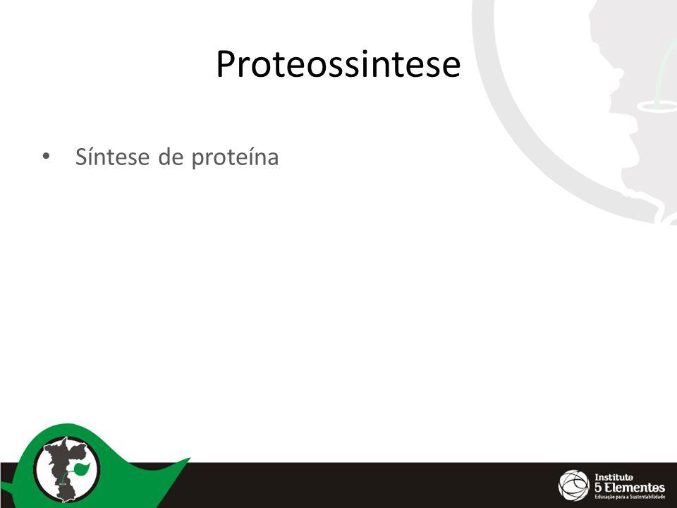 Proteossintese Síntese de proteína