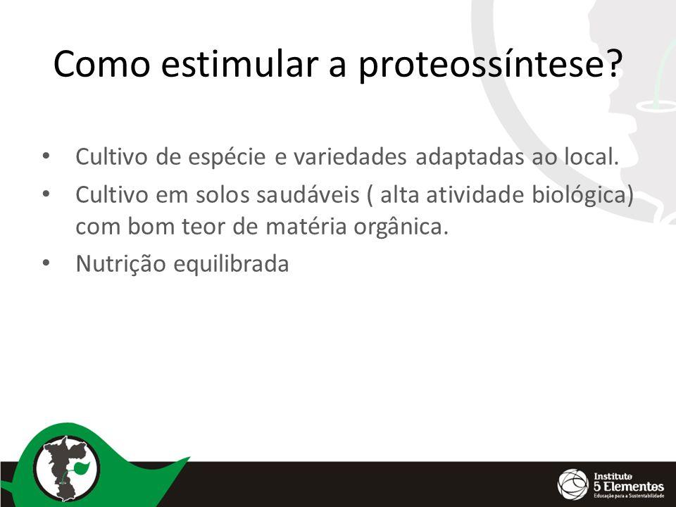 Como estimular a proteossíntese