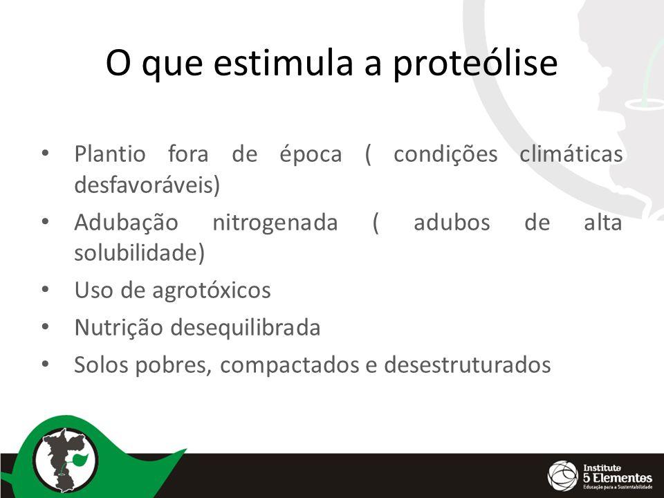 O que estimula a proteólise