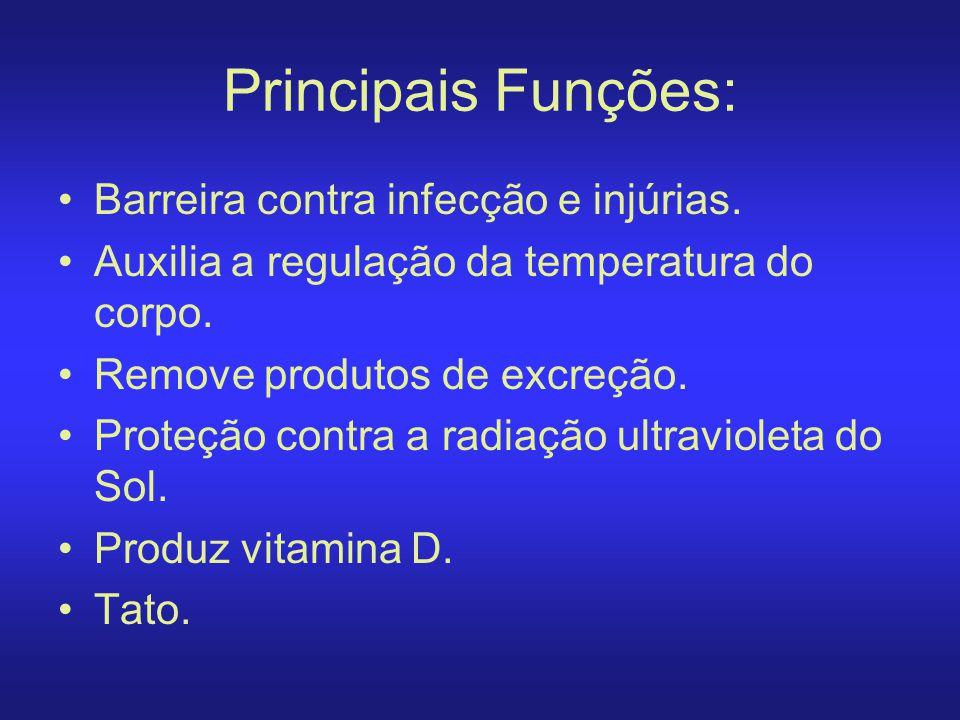 Principais Funções: Barreira contra infecção e injúrias.