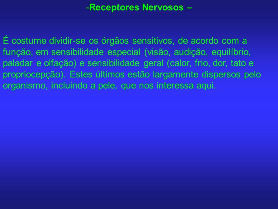 Receptores Nervosos –
