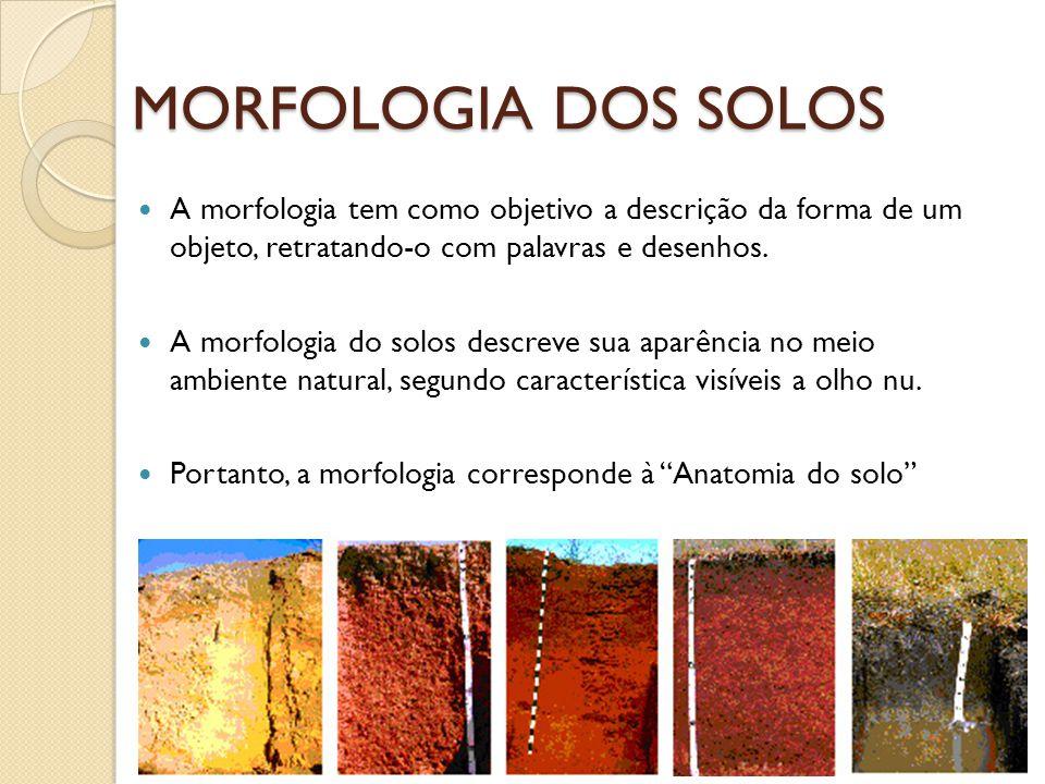 MORFOLOGIA DOS SOLOS A morfologia tem como objetivo a descrição da forma de um objeto, retratando-o com palavras e desenhos.