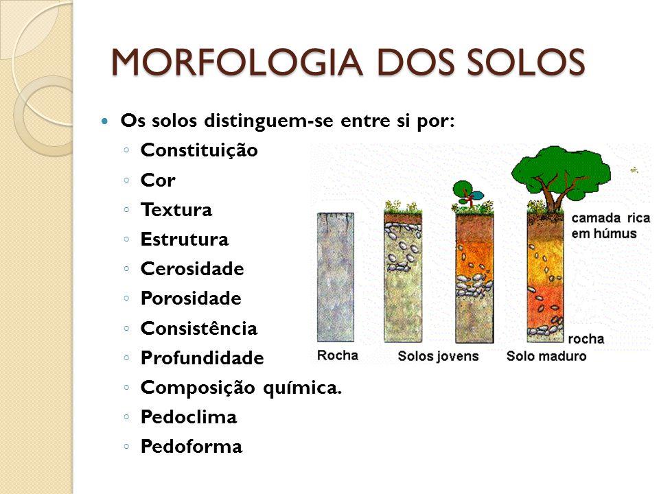 MORFOLOGIA DOS SOLOS Os solos distinguem-se entre si por: Constituição