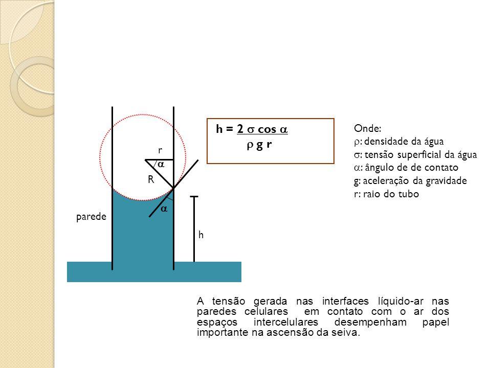 h = 2  cos   g r Onde: : densidade da água