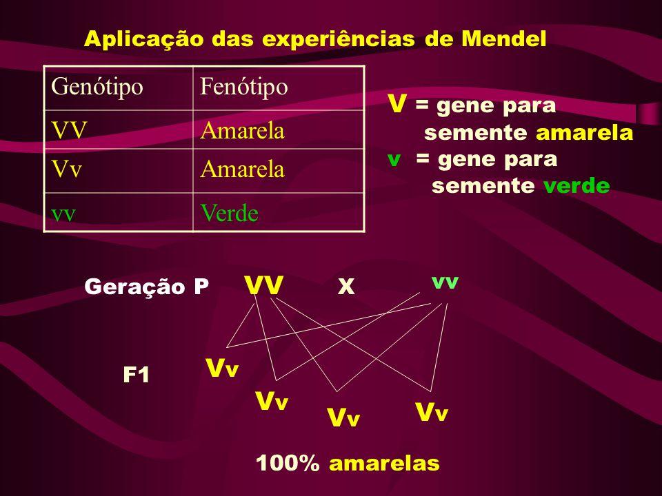 Genótipo Fenótipo VV Amarela Vv vv Verde V = gene para VV Vv Vv Vv Vv