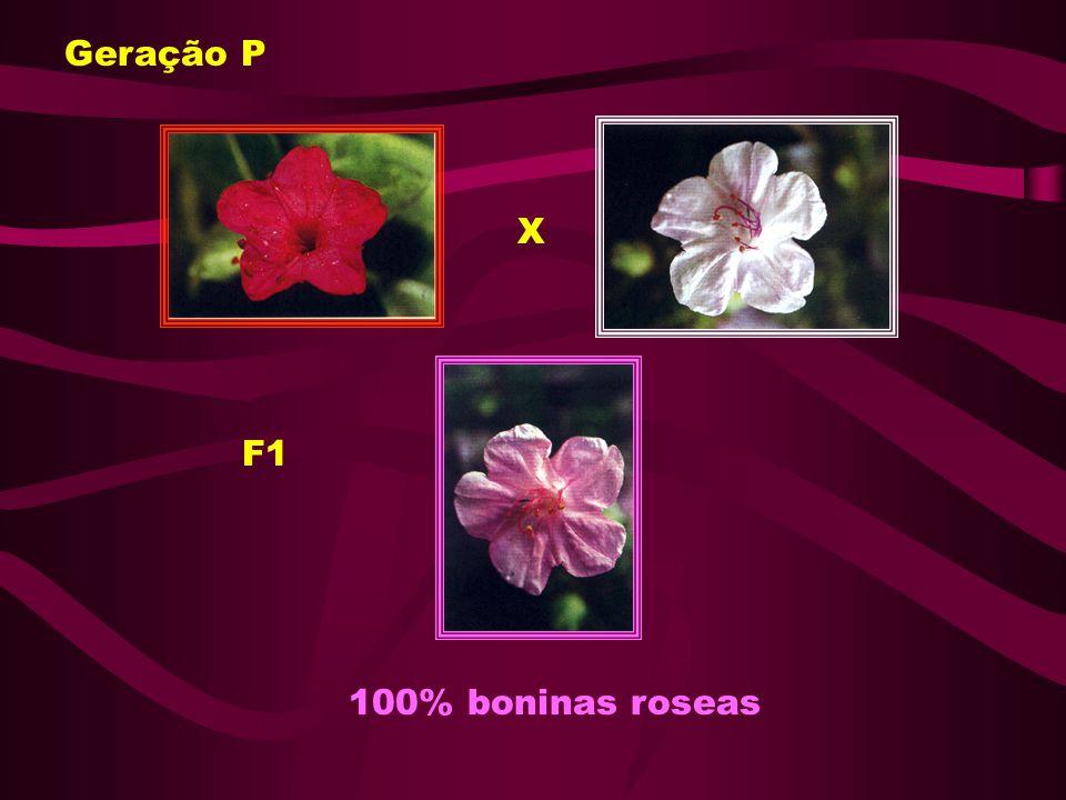 Geração P X F1 100% boninas roseas