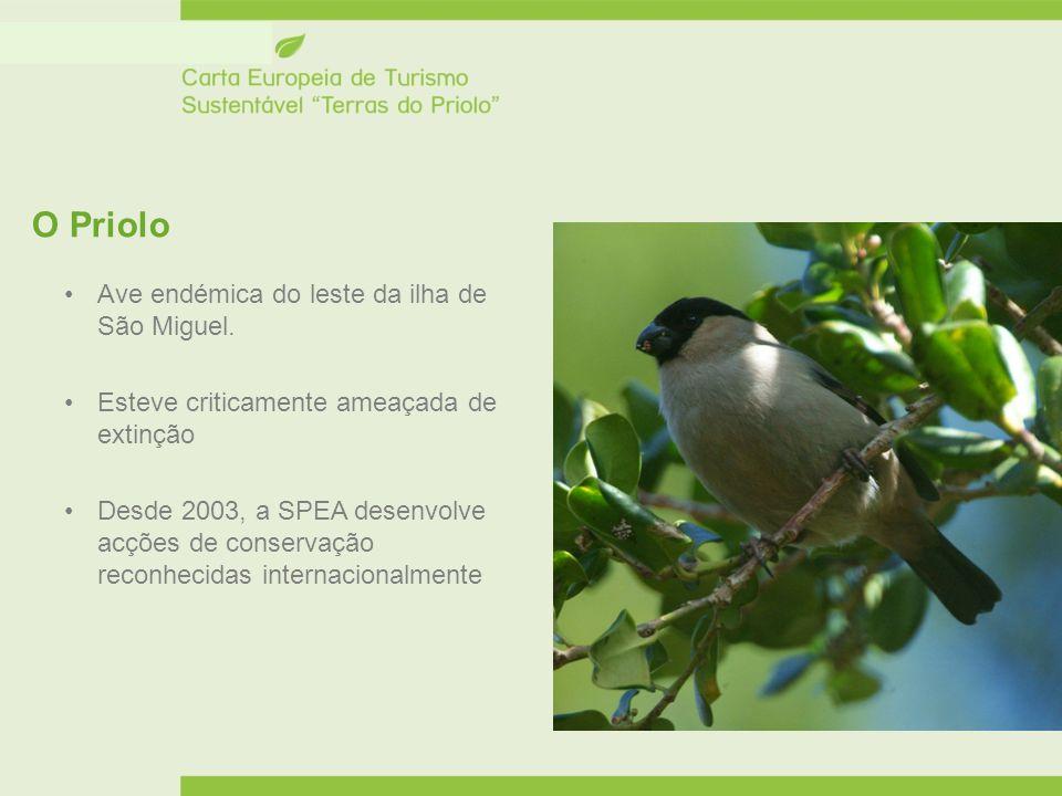 O Priolo Ave endémica do leste da ilha de São Miguel.