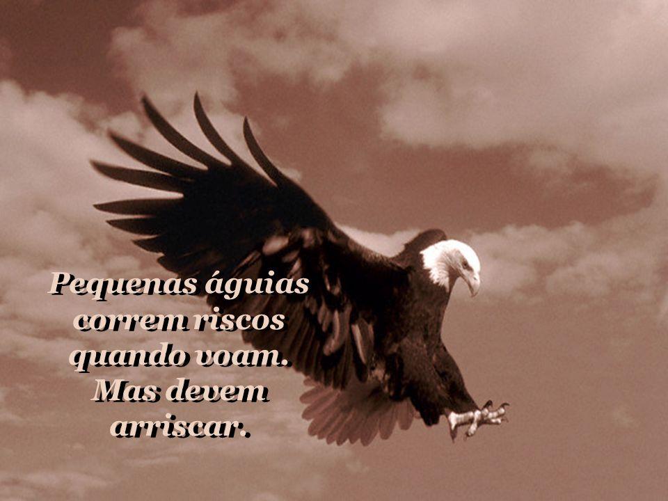 Pequenas águias correm riscos quando voam. Mas devem arriscar.