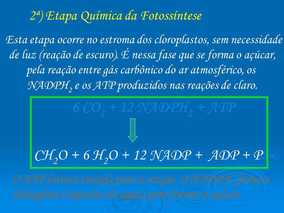 6 CO2 + 12 NADPH2 + ATP CH2O + 6 H2O + 12 NADP + ADP + P