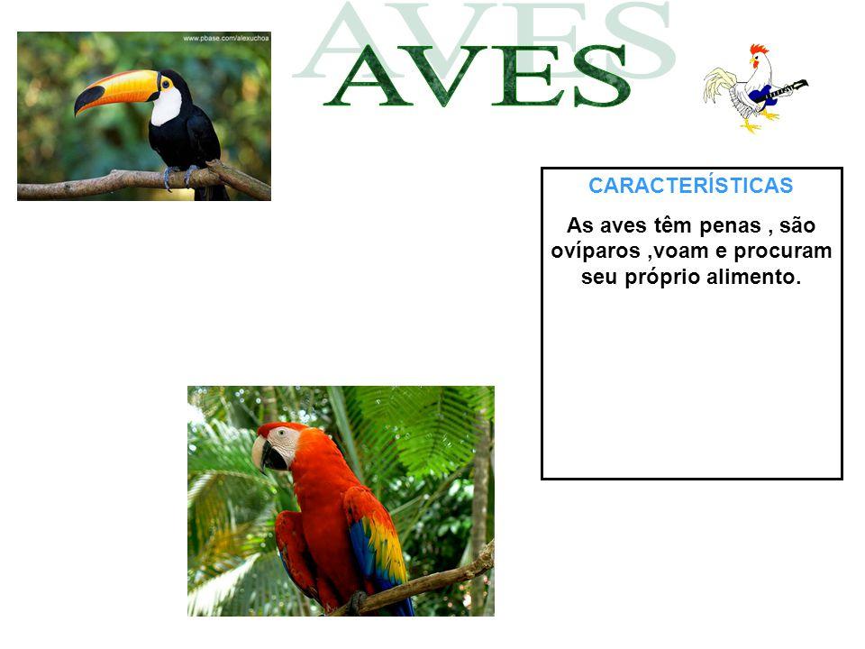 AVES CARACTERÍSTICAS As aves têm penas , são ovíparos ,voam e procuram seu próprio alimento.
