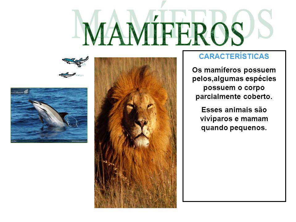 Esses animais são vivíparos e mamam quando pequenos.