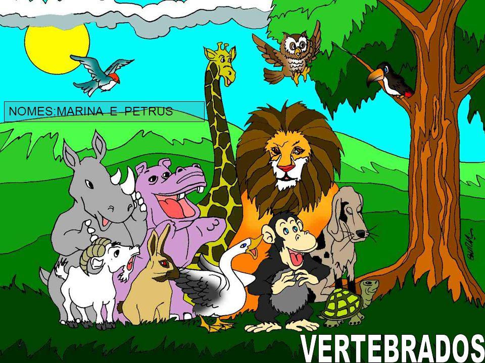 NOMES:MARINA E PETRUS VERTEBRADOS