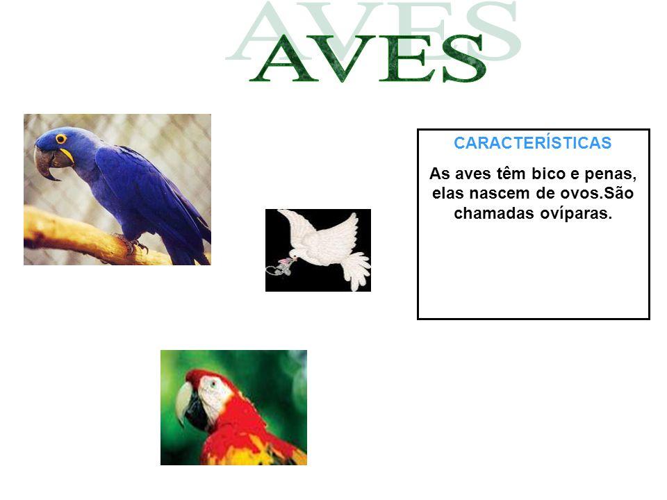 As aves têm bico e penas, elas nascem de ovos.São chamadas ovíparas.
