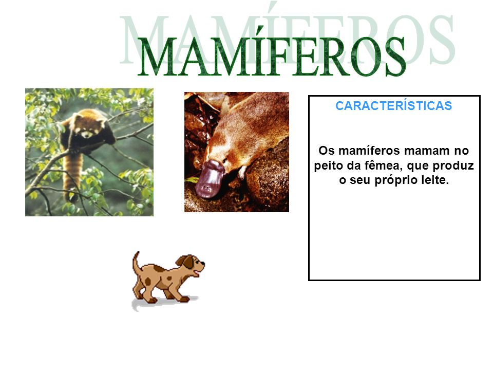 Os mamíferos mamam no peito da fêmea, que produz o seu próprio leite.