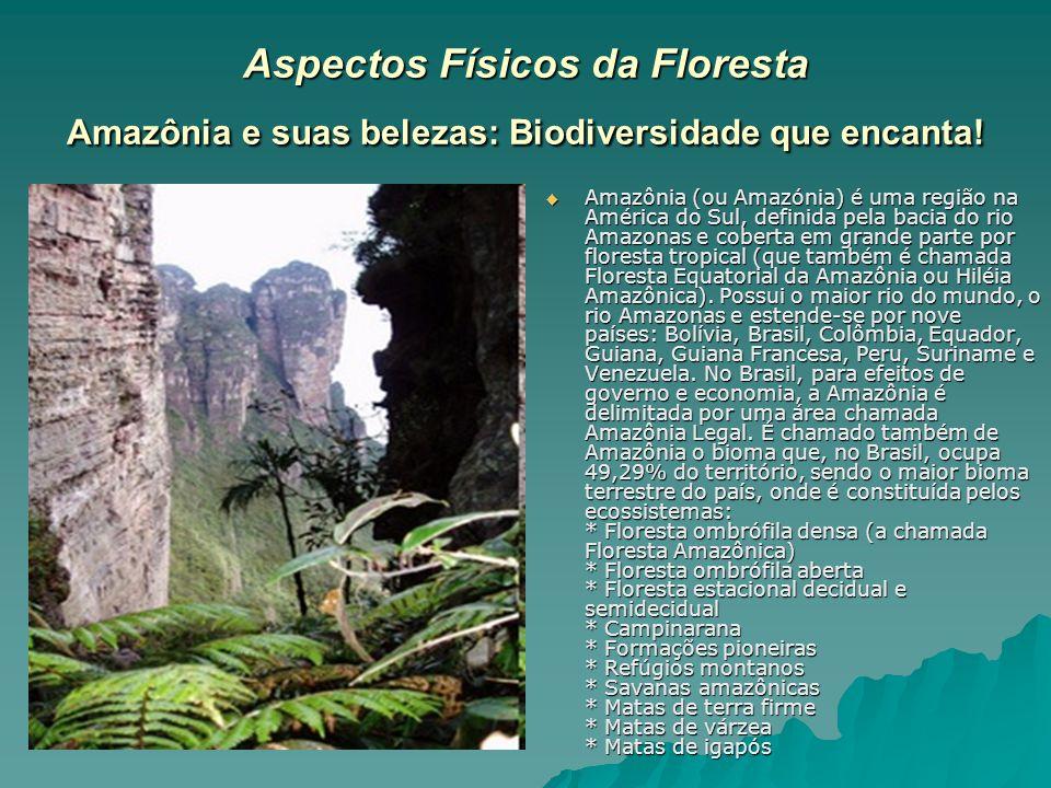 Aspectos Físicos da Floresta Amazônia e suas belezas: Biodiversidade que encanta!