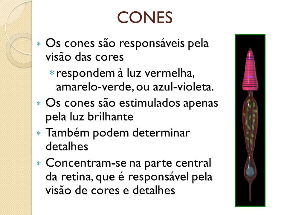 CONES Os cones são responsáveis pela visão das cores