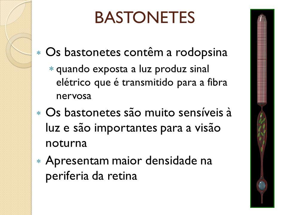 BASTONETES Os bastonetes contêm a rodopsina