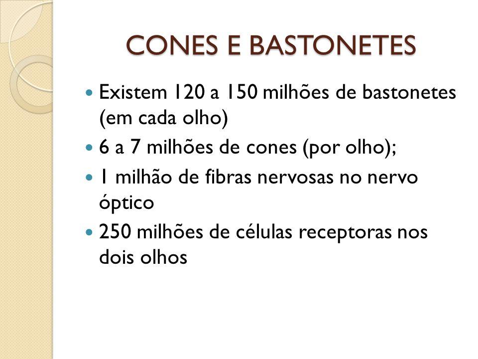 CONES E BASTONETES Existem 120 a 150 milhões de bastonetes (em cada olho) 6 a 7 milhões de cones (por olho);