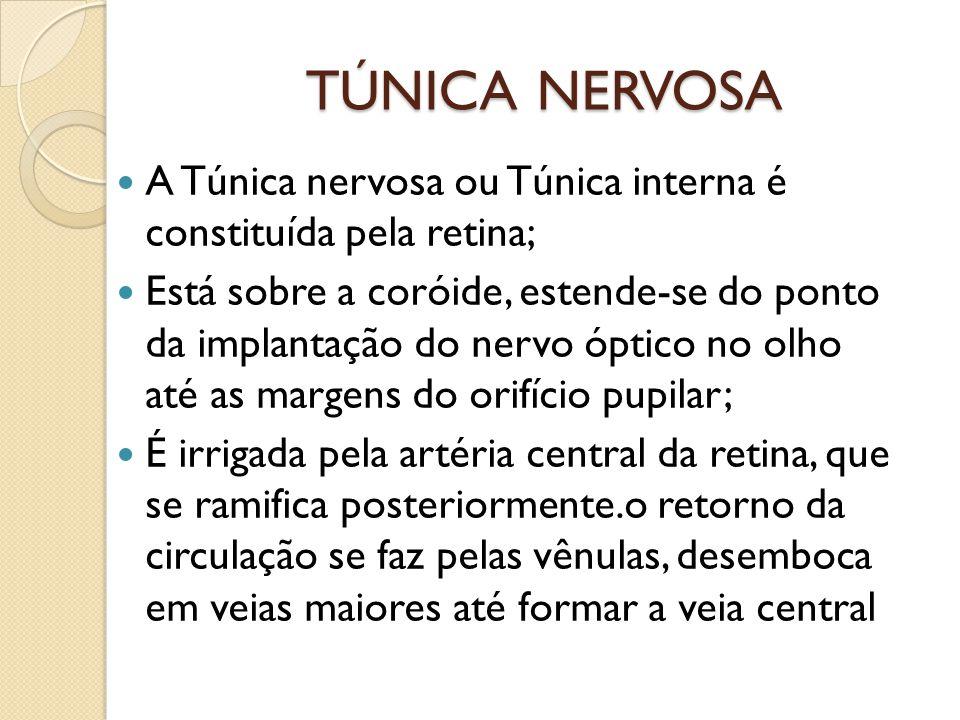 TÚNICA NERVOSA A Túnica nervosa ou Túnica interna é constituída pela retina;
