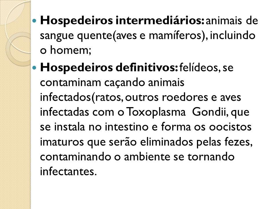 Hospedeiros intermediários: animais de sangue quente(aves e mamíferos), incluindo o homem;