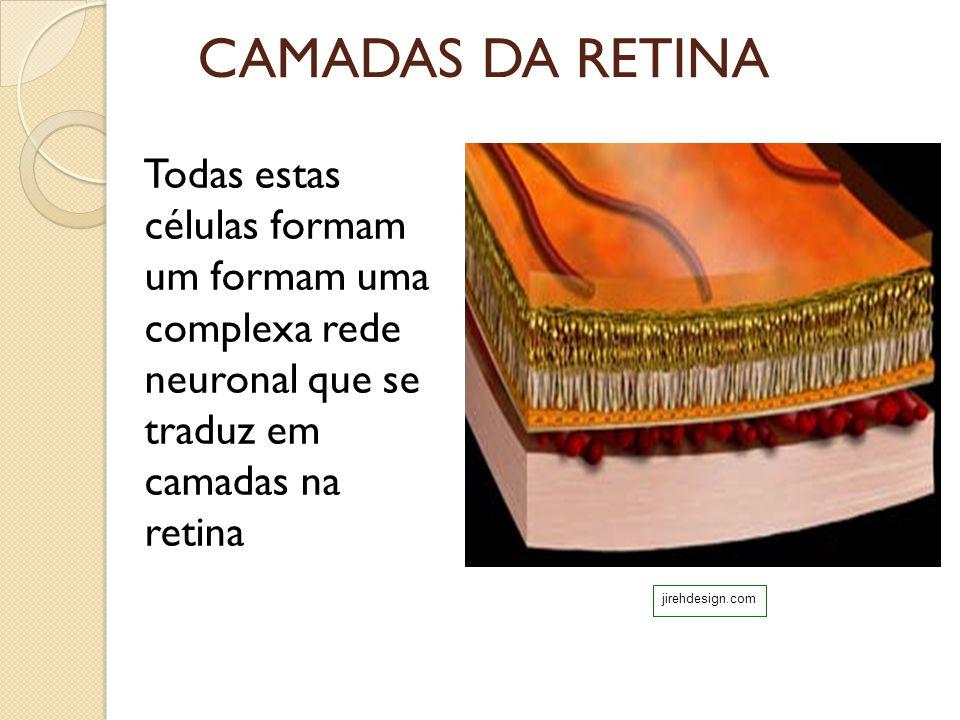 CAMADAS DA RETINA Todas estas células formam um formam uma complexa rede neuronal que se traduz em camadas na retina.