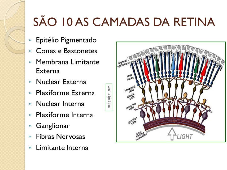 SÃO 10 AS CAMADAS DA RETINA