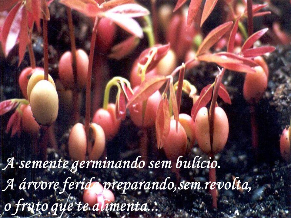 A semente germinando sem bulício.