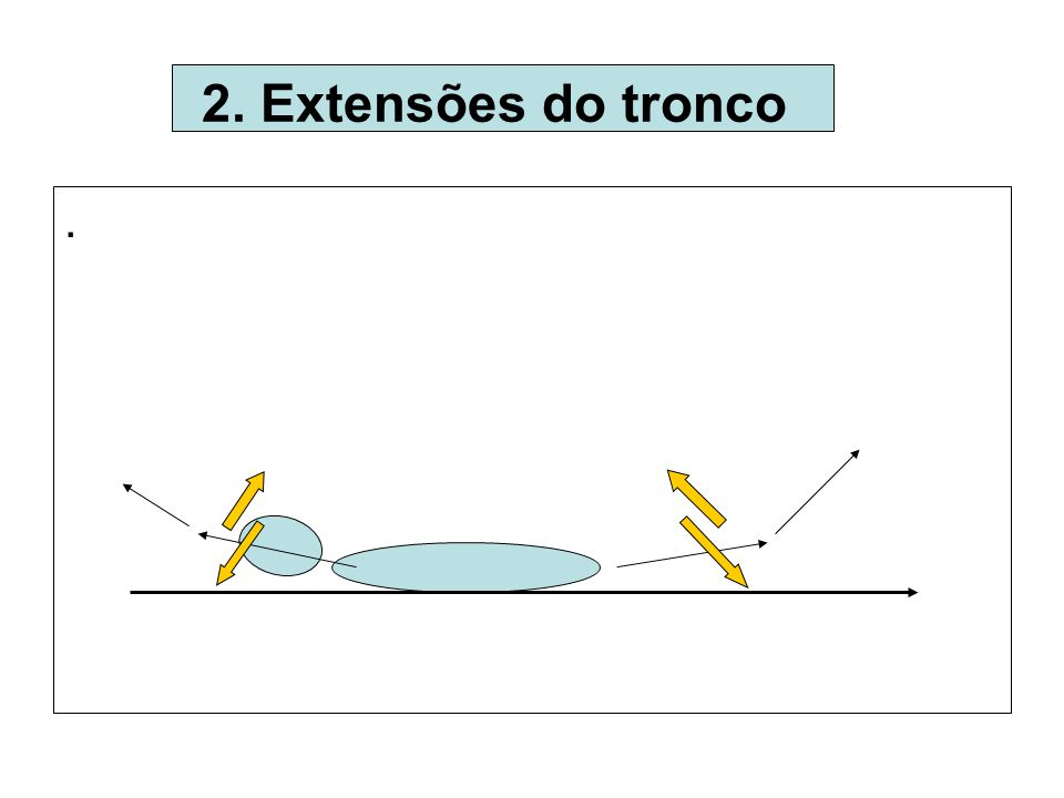 . 2. Extensões do tronco .