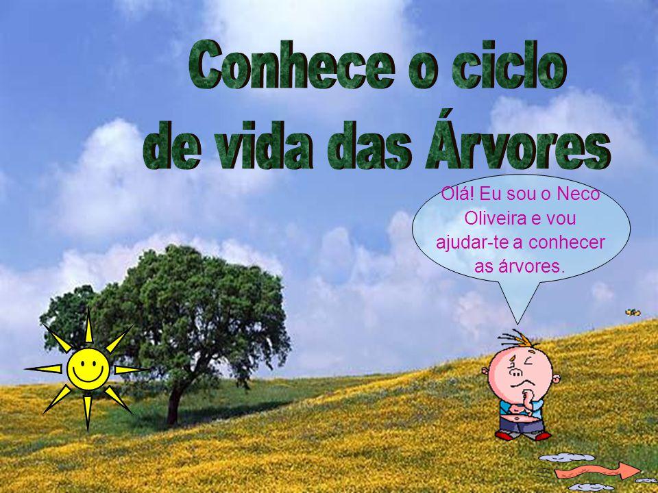 Olá! Eu sou o Neco Oliveira e vou ajudar-te a conhecer as árvores.