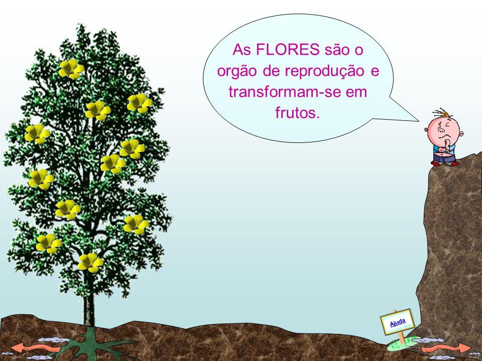As FLORES são o orgão de reprodução e transformam-se em frutos.
