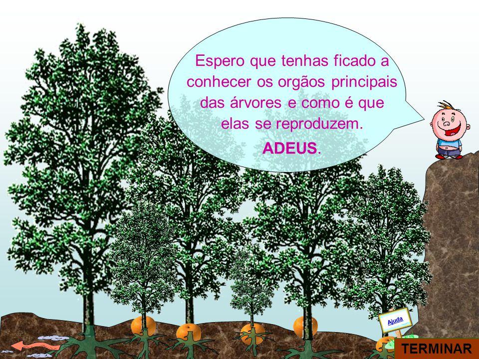 Espero que tenhas ficado a conhecer os orgãos principais das árvores e como é que elas se reproduzem.