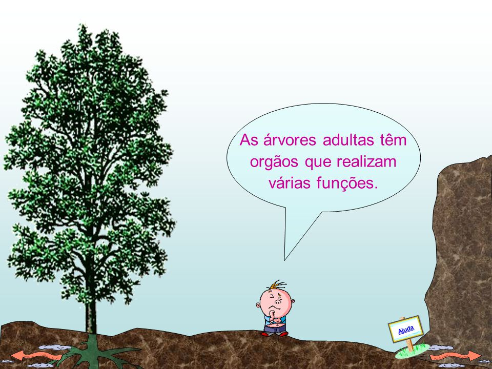 As árvores adultas têm orgãos que realizam várias funções.